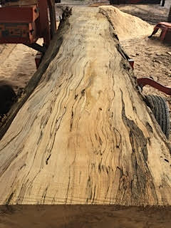 Spalted beech slab!!!